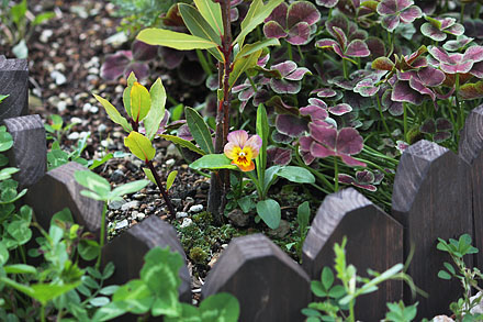 Plants06